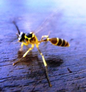 using pesticides to kill a wasp